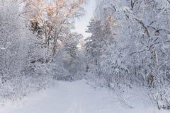 Europeiskt vinterlandskap Träd som täckas med snö på Frosty Morning härlig skogliggandevinter Härlig vintermorgon I arkivbild
