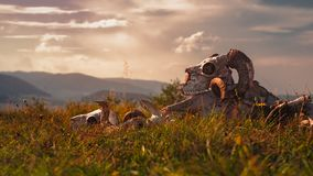 Europejska baran czaszka w trawie zdjęcia royalty free