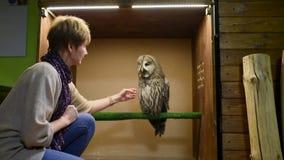 Europejska kobieta muska tawny sowy zbiory wideo