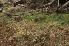 Europejski żbik w zielonym naturalnego siedliska obsiadaniu fotografia royalty free