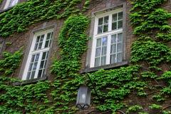 Europejski ceglany dom z ciosowymi okno z zielonym bluszczem i plenerowym latern Zdjęcie Royalty Free