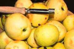 Europejski dziki appl Fotografia Stock