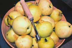 Europejski dziki appl Zdjęcie Stock