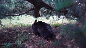 Europejski Dziki królik siedzi pod drzewem zbiory wideo
