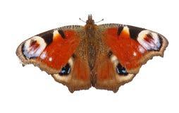 Europejski pawi motyl odizolowywający na białym tle Odgórny widok Fotografia Stock