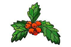 Europejskich bożych narodzeń ostrokrzewu jagodowy uświęcony aquifolium opuszcza i owoc Kwieciści gałęziaści czerwieni xmas zimy w ilustracji