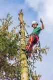 Europese arborist die in bovenkant van spar beklimmen royalty-vrije stock fotografie