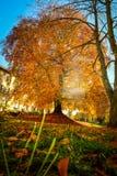 Europese beuk in mooie de herfstkleuren royalty-vrije stock afbeelding