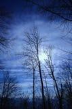 Europese Beukboom in de winter Royalty-vrije Stock Fotografie
