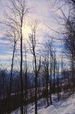 Europese Beukboom in de winter Royalty-vrije Stock Afbeeldingen