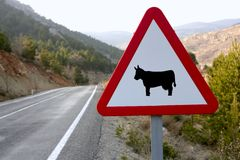 Europese verkeersteken, koeien op de weg Royalty-vrije Stock Foto's