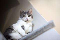 Europese witte kattenzitting op graniet wordt gefotografeerd dat van onderaan Stock Foto's