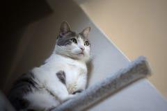 Europese witte kattenzitting op graniet, wordt gefotografeerd dat van onderaan Royalty-vrije Stock Afbeeldingen