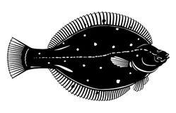 Europese Zwart-witte Scholvissen royalty-vrije illustratie