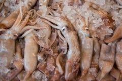 Europian squid fishes calamari background. Royalty Free Stock Image
