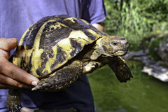 Europian turtle Stock Photography