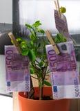 500 Euros, die im Stift am Baum trocknen Lizenzfreies Stockbild