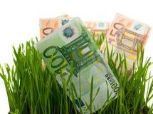 euros gräs isolerat Royaltyfri Foto