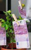 500 euros séchant dans la goupille à l'arbre Photographie stock libre de droits