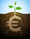 Eurozeichen mögen Wurzel der Anlage Lizenzfreies Stockfoto