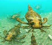 Eurypterids που κολυμπά σε ένα πακέτο Στοκ Φωτογραφίες