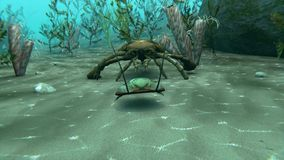 Eurypterus Chasing Trilobite Animation. An animation of Eurypterus chasing a Trilobite on a sea bottom. Eurypterids are related to arachnids and include the stock footage