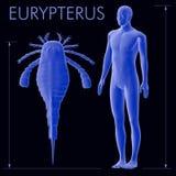 Eurypterus e confronto umano di dimensione Immagini Stock Libere da Diritti
