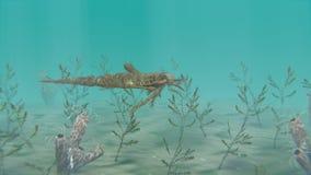 Eurypterus het Zwemmen stock footage