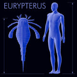 Eurypterus I istoty ludzkiej Wielkościowy porównanie Obrazy Royalty Free