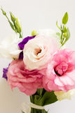 Eustoma Royalty Free Stock Images