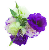 Eustoma bouquet Stock Photography