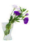 Eustoma bouquet in vase Royalty Free Stock Photography