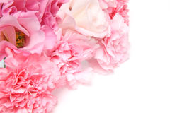 Eustoma and carnation in a white background Stock Images