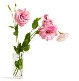 Eustoma flowers Stock Images
