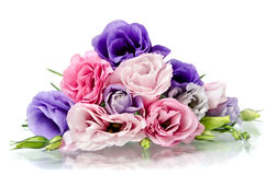 Eustoma flowers Stock Images