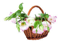 Eustoma flowers in the basket Stock Photography
