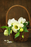 Eustoma flowers in basket Royalty Free Stock Photo