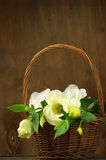 Eustoma flowers in basket Stock Images