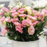 Eustoma flowers bouquet Stock Photos