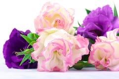 Eustoma flowers Royalty Free Stock Photography