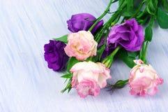 Eustoma flowers Royalty Free Stock Images