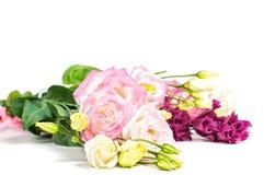 Eustoma flowers on light background Stock Image
