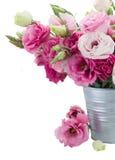 Eustoma flowers in metal pot close up Stock Photos