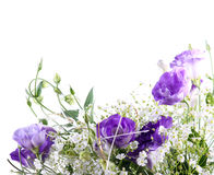 Eustoma flowers Royalty Free Stock Photo