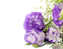 Eustoma flowers Royalty Free Stock Photography