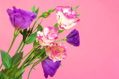 Eustoma flowers Stock Photo