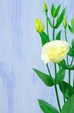 Eustoma flowers Royalty Free Stock Image