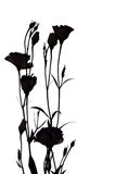 Eustoma flowers silhouette Stock Photography