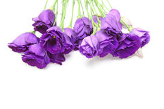 Eustoma in a white background Royalty Free Stock Photography