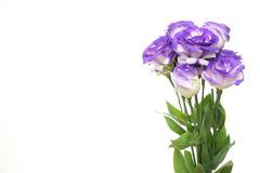 Eustoma in a white background Stock Photo